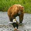 Alaskan Food Chain