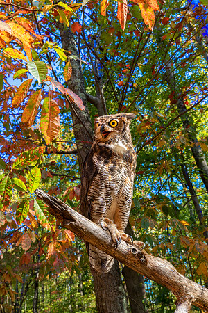 Hootie in the Fall
