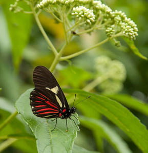 Fauna Permatree Butterfly