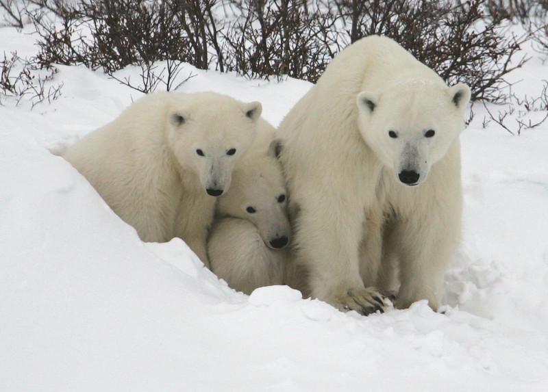 Polar Trio