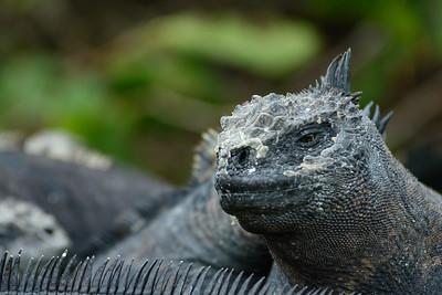 Iguana Check-Out
