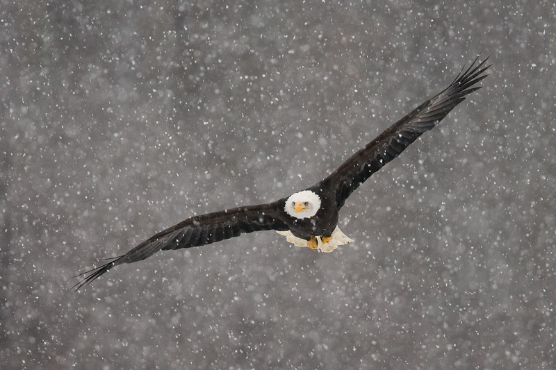 Soaring Through Snow