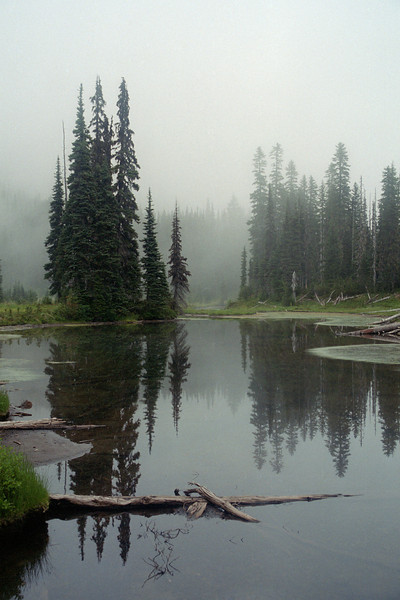 Trees reflected in small tarn on misty day in Mt. Rainier National Park
