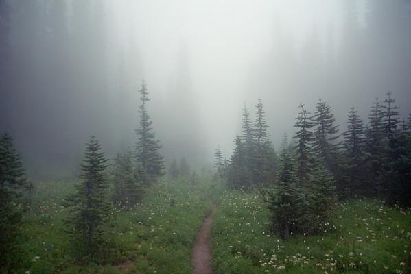 The Wonderland Trail weaves through a foggy meadow in Mount Rainier National Park