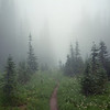 The Wonderland Trail weaves through a foggy meadow in Mount Rainier National Park