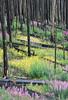 Forest Rebirth