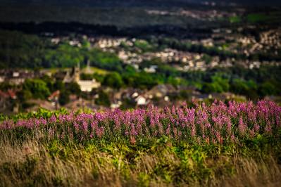 Flowers on the Moor