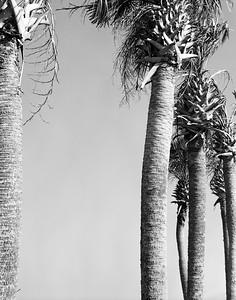 Palms #1
