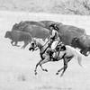 Buffalo Roundup I