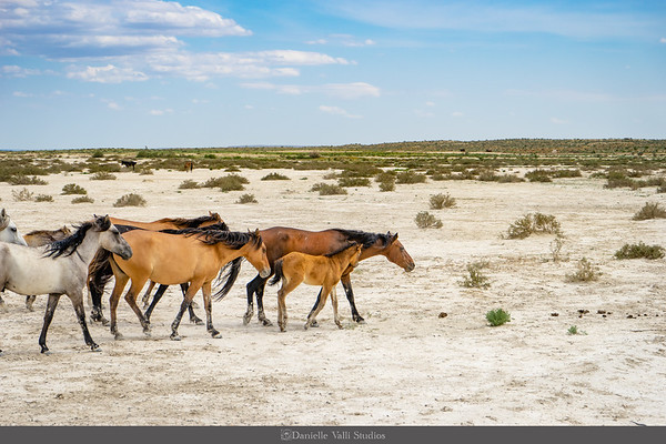 Wild Horses in Pink Canyon