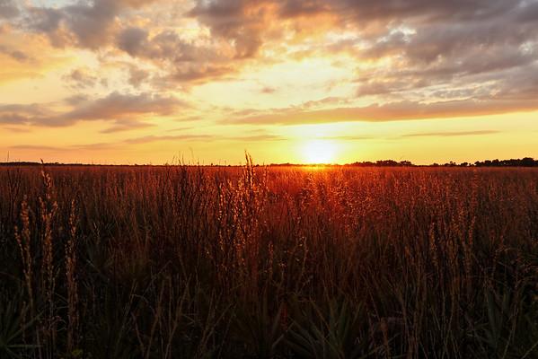 Kissimmee Prairie Preserve Sunset