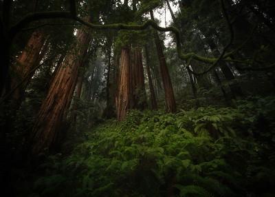 Misty Meadow Muir Woods