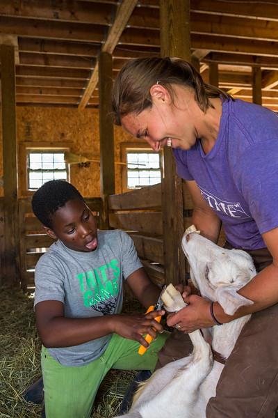North Country School barn chores (includes horses, sheep, goats). photo by Nancie Battaglia
