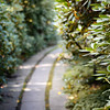 Marabou Path