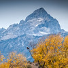 Grand Teton Bald Eagle from Snake River