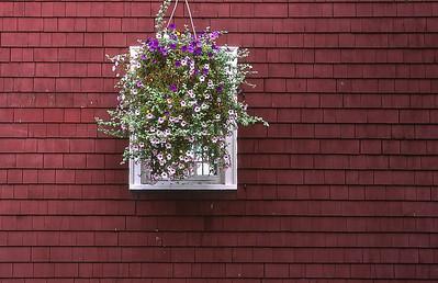 Flowers Window