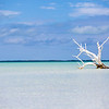 Lone Tree - Harbour Island, Bahamas - Low Tide - Blue Sky