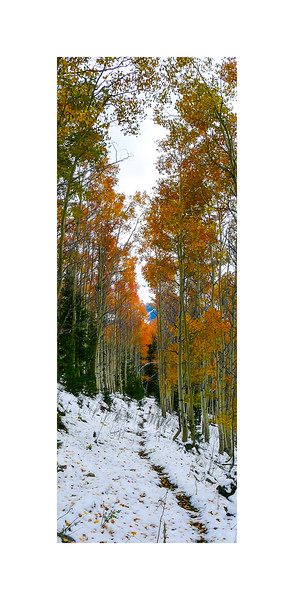 Autumn Paymaster Gulch Trail I