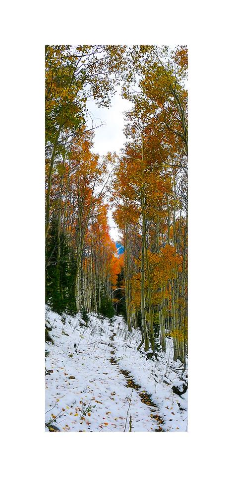 Autumn Paymaster Gulch Trail I