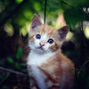 A Brave Kitten