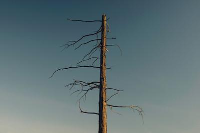 barren | © ian sbalcio