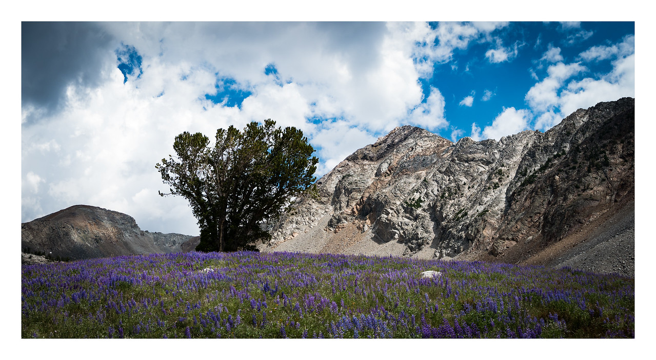 McIntire Peak in Big Basin with Lupine
