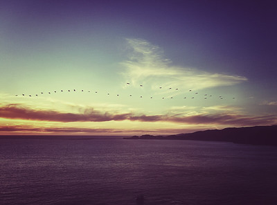 Birds Flying V Formation, San Francisco Bay Area