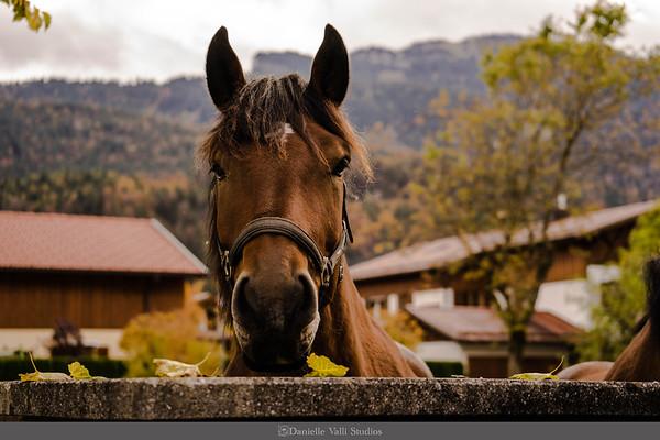 Horse says Hello