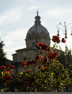 Roman Roses