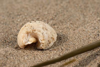 Worn Shell