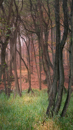 The Temptation of the Alder Forest