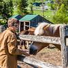 North Country School barn chores. photo by Nancie Battaglia