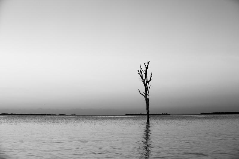 Lone Tree - Harbour Island, Bahamas - Black and White