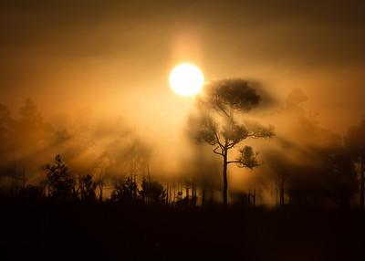 Pinelands Smoke, Everglades NP