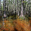 Big Cypress Swamp, Florida