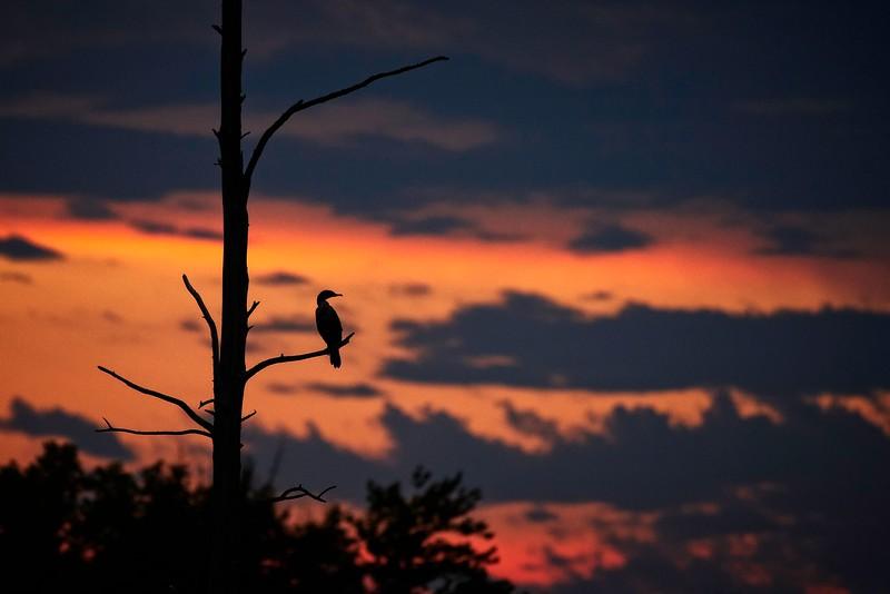 Sunset View #2