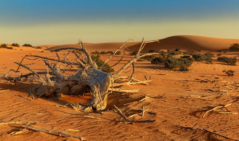 Desert Silence