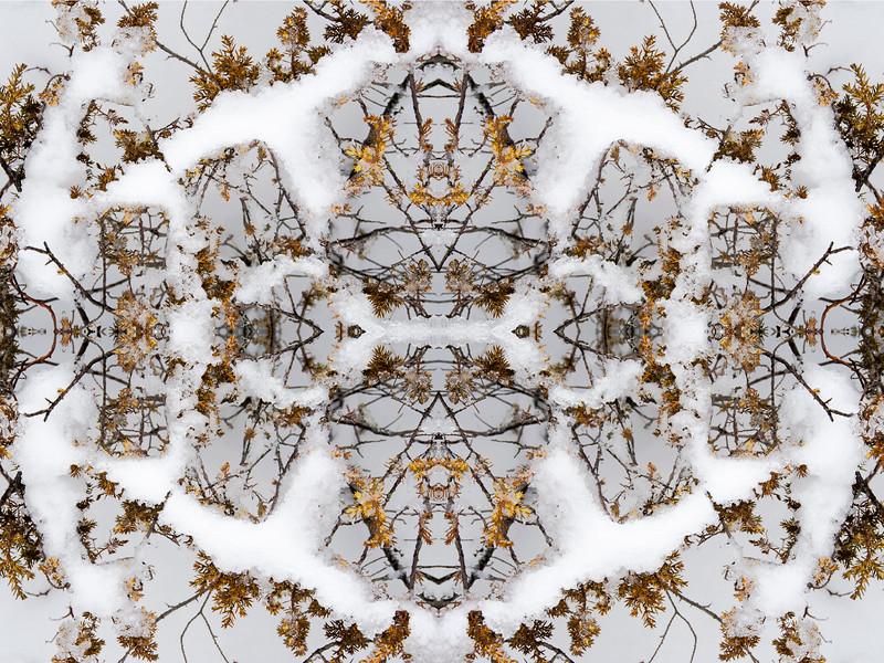 Revelation In The Snow : Symmetry Series #41