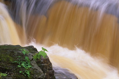 Millet Falls Detail