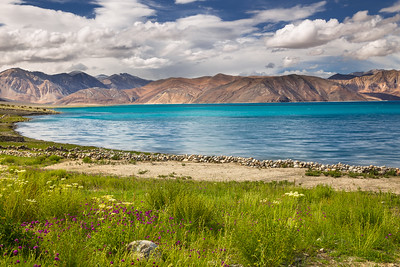 Flowers at the shore of Pangong Lake