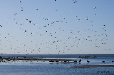 Birds at Lake Manitoba