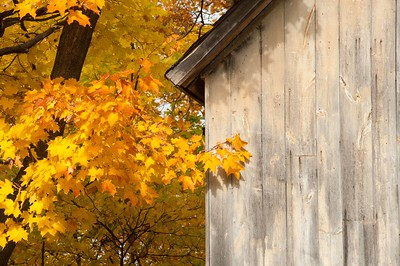 Barn and Fall Leaves