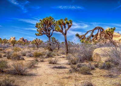 Path To Joshua Trees