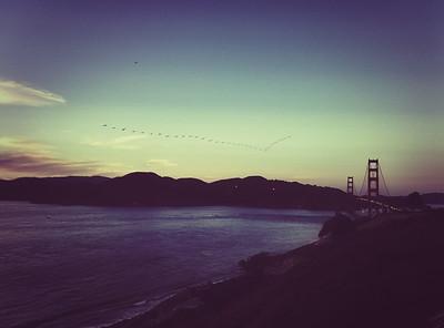 Birds Flying V Formation, San Francisco Bay Area