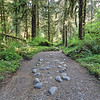 Olympic National Park Path