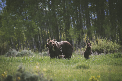 Grizzly Picnic