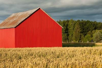 Red Barn Wheat