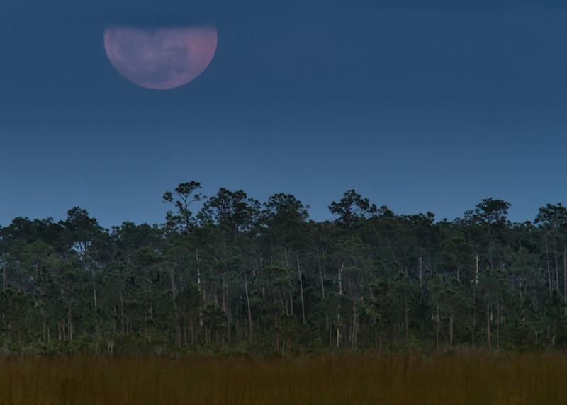 Supermoon, Pinelands, Everglades NP
