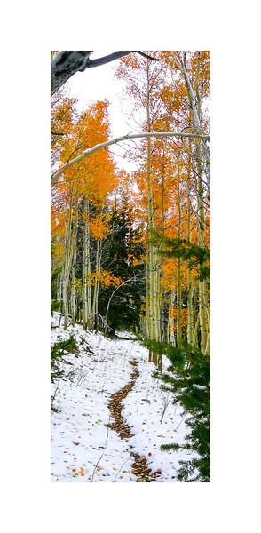 Autumn Paymaster Gulch Trail II