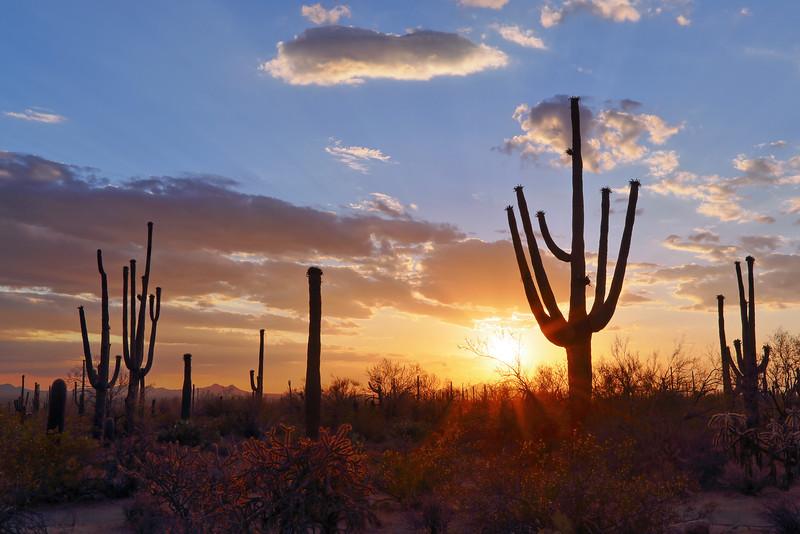 Saguaro Cactus Sunset